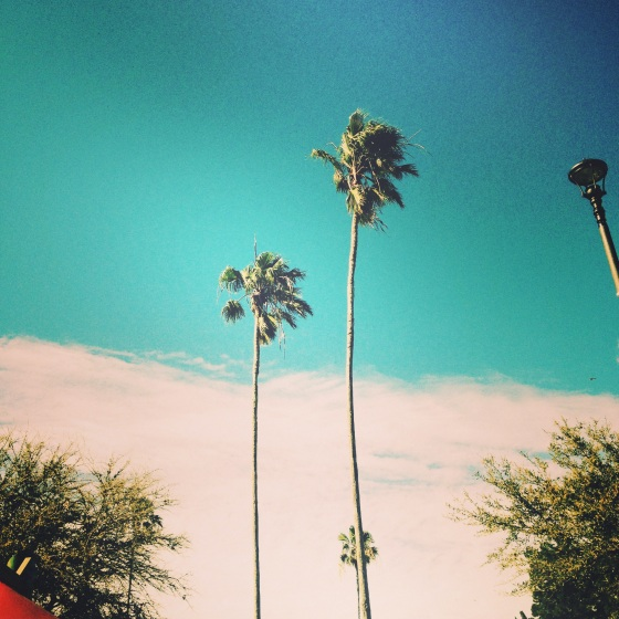 Palms at the park