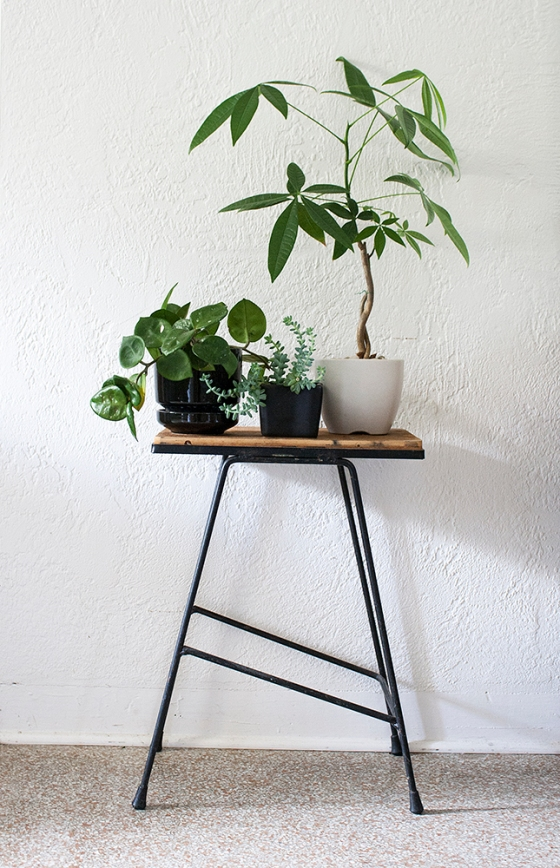 plant_table1
